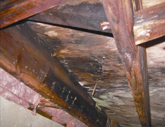 mold and rot in a Ithaca crawl space