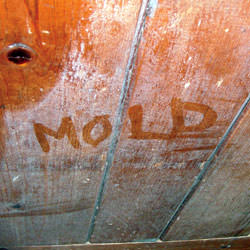 Wood in  that's showing signs of cosmetically damaging mold