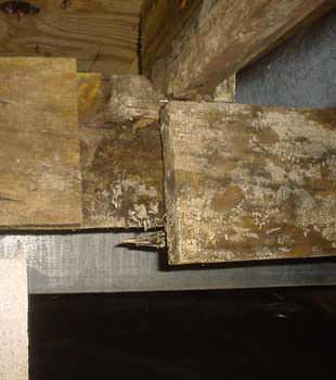 Extensive basement rot found in Syracuse by Halco