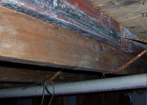 Rotting, decaying wood from mold damage in